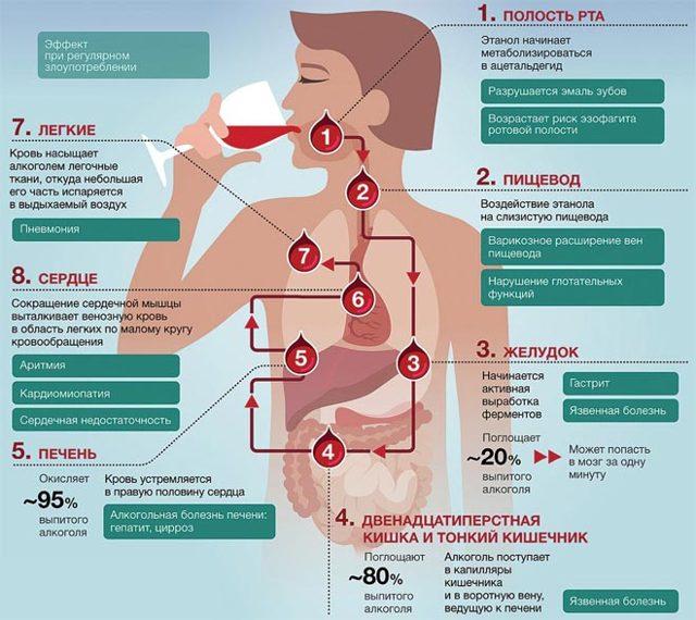 Понос после алкоголя – почему пьянка вызывает диарею?
