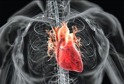 Алкоголь и сердце: вред воздействия напитков для него и последствия: нагрузка, боли, тяжесть