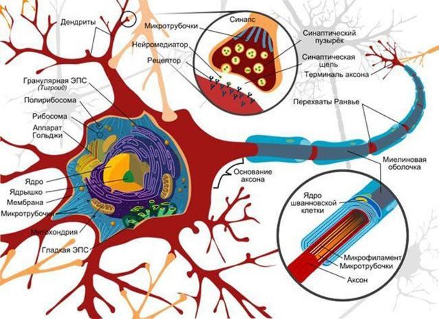 Полинейропатия алкогольная: симптомы, диагностика и лечение