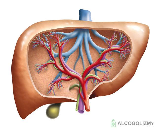 Корвалол с похмелья: можно ли пить препарат при похмелье, если болит сердце?